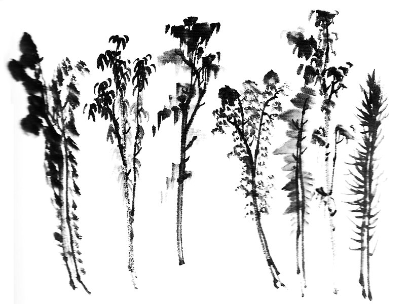 Chinese painting: the trees