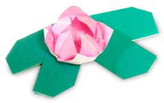 Origami of lotus, picture of menu