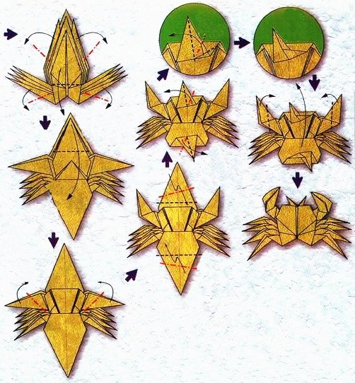 Origami of the zodiac: the cancer